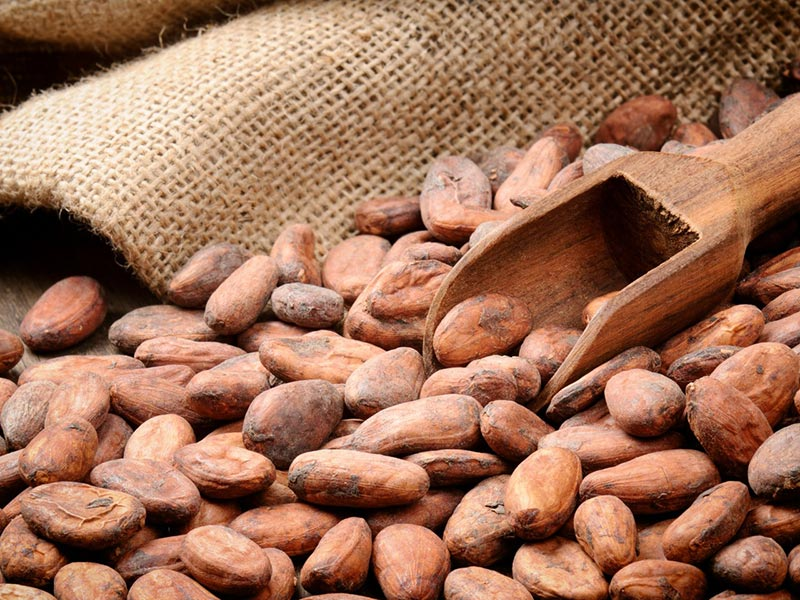 Sprzedaż hurtowa superfoods Kakao